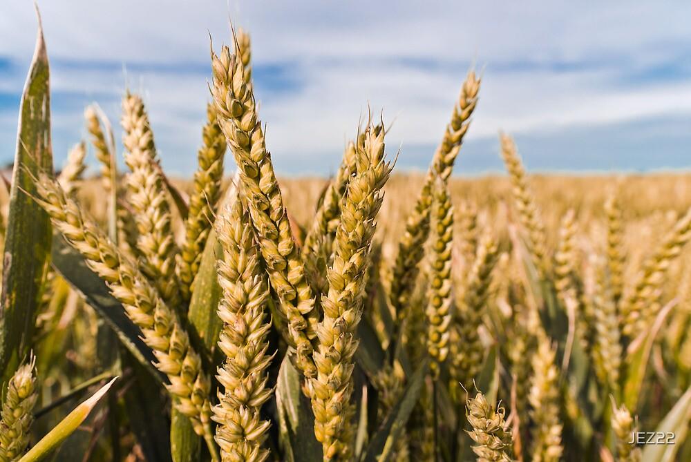Wheat by JEZ22