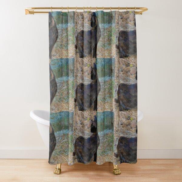 Gato de colores Shower Curtain