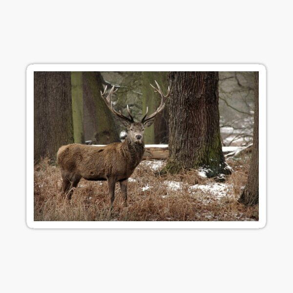 Stag Deer in Forest Sticker