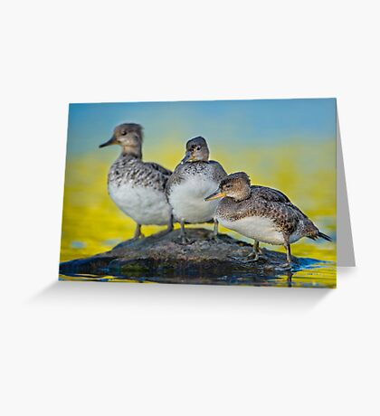 Meet the Mergansers Greeting Card