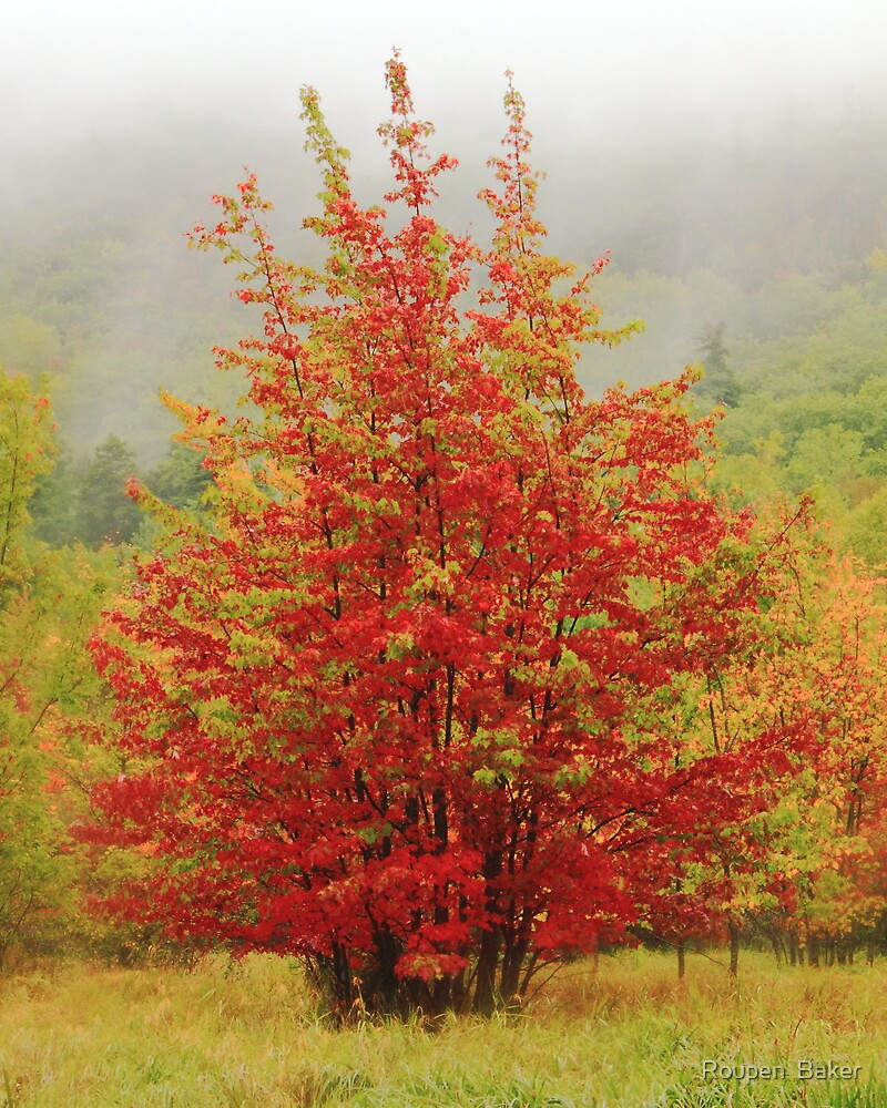 Red Maples in the Mist by Roupen  Baker