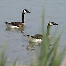 Two Geese by Barry W  King