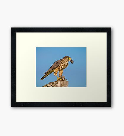 Having a meal  Framed Print