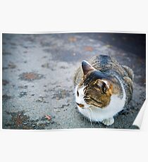 Bouncy Fat Cat 貓 - Otaru 小樽 , Hokkaido 北海道 Poster