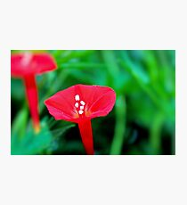 Cypress Flower Photographic Print