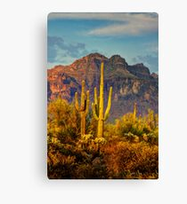 The Desert Golden Hour II  Canvas Print