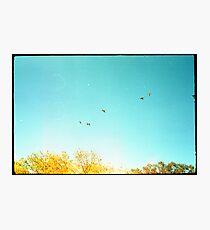 Seven Ducks Over Trees Photographic Print