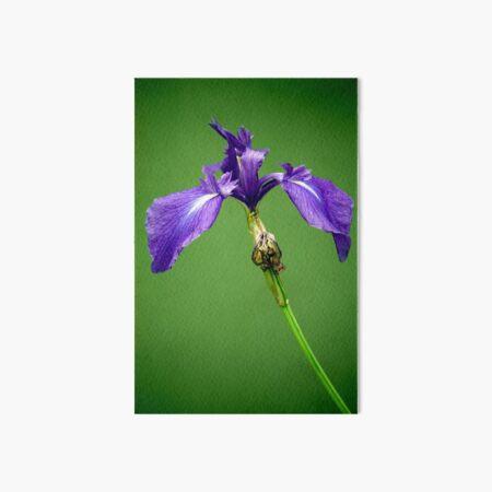Purple Iris Art Board Print
