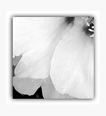 Flower | White Petals | Flowers  Photographic Print