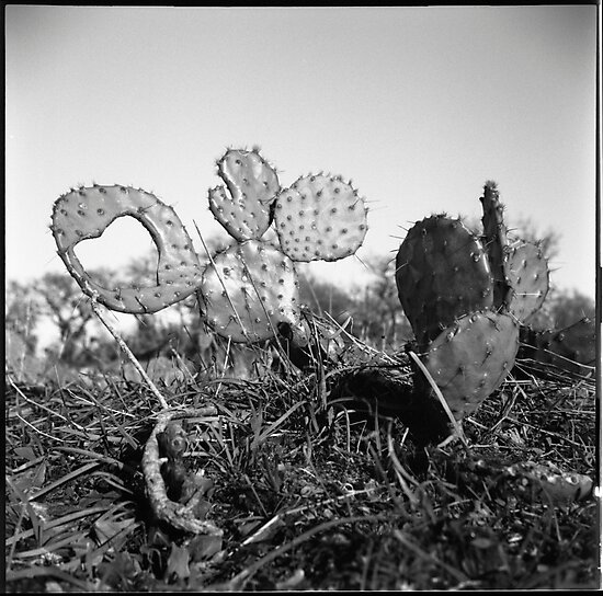 A Heart From A Cactus by Photonmixer