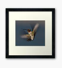 Humming Bird! Framed Print