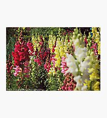 Coloured Flowers Photographic Print
