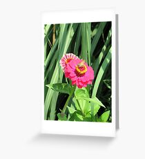 Grass skipper on magenta zinnia Greeting Card