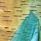 Layer Of Bark by David Piszczek