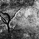 Black Oak, Yosemite Valley, California by Pete Paul