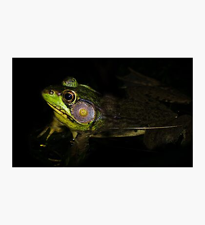 Frog in shade! Photographic Print