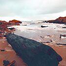 Driftwood, West Coast, Tasmania by wearehouse