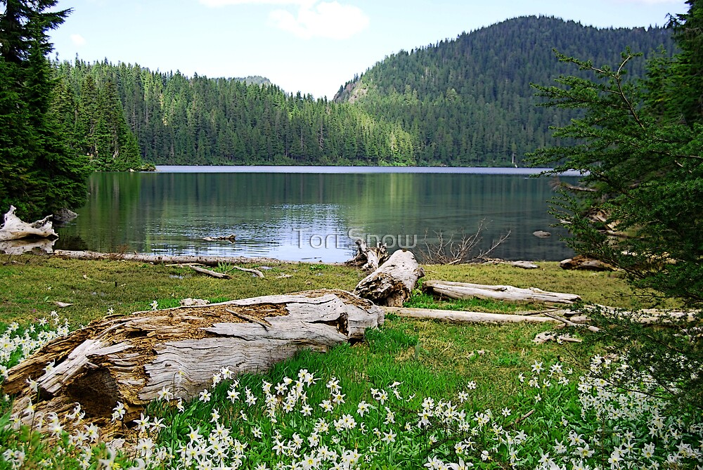 Lake Mowich by Tori Snow