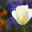 All Out of Tulip Titles by Paul-M-W