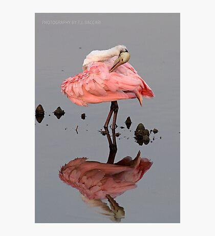 Spoonbill Making Pretty Photographic Print