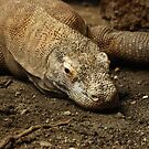 Komodo Dragon by plopezjr