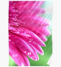 Pink Petals In The Rain Poster