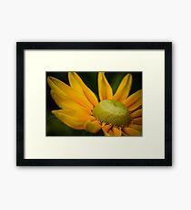 Macro Yellow Daisy Framed Print