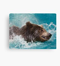 Bear's splashing in the Water Canvas Print