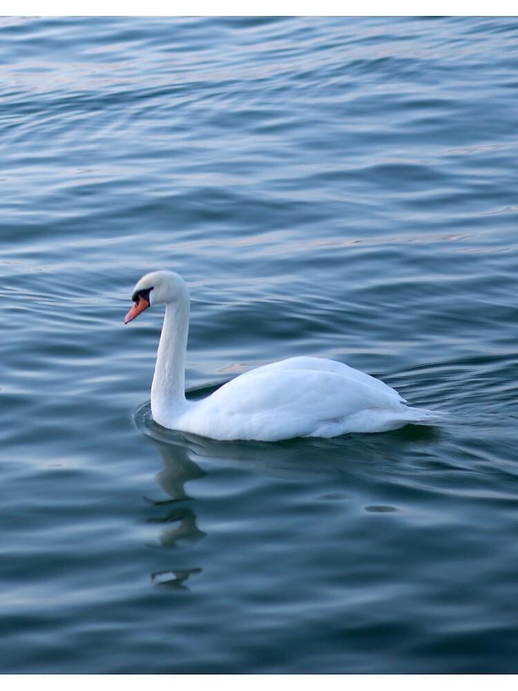 White swan by m-rzeszotarska
