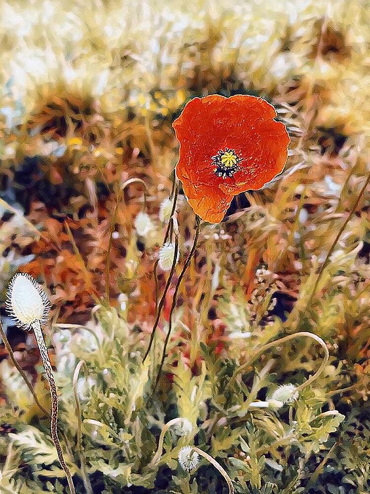 Red poppy by m-rzeszotarska
