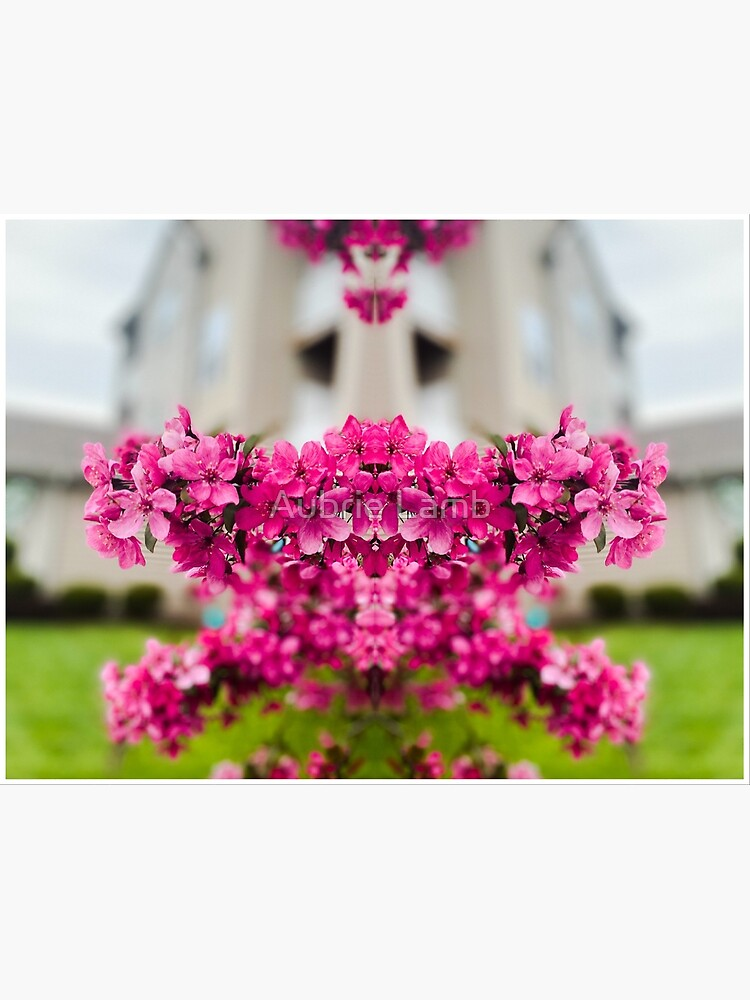 Symmetry of Pink Flowers by Aubb