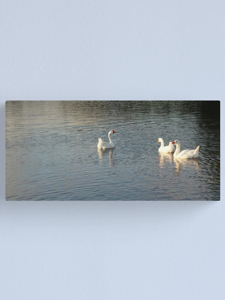 Alternate view of geese in Trojan pond, near Goble, Oregon 2 Canvas Print