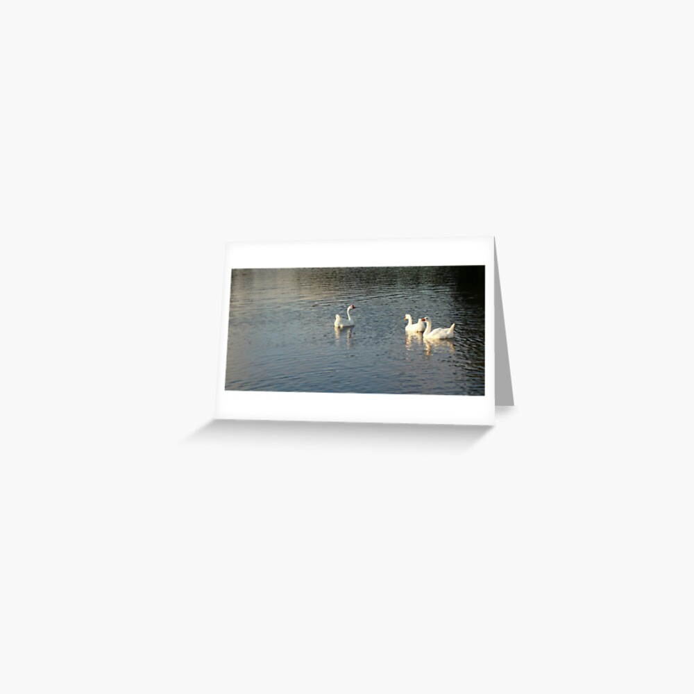 geese in Trojan pond, near Goble, Oregon 2 Greeting Card