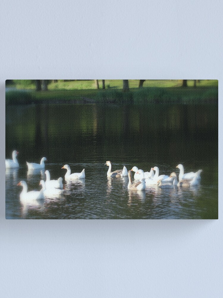 Alternate view of Geese in Trojan pond, near Goble, Oregon Canvas Print