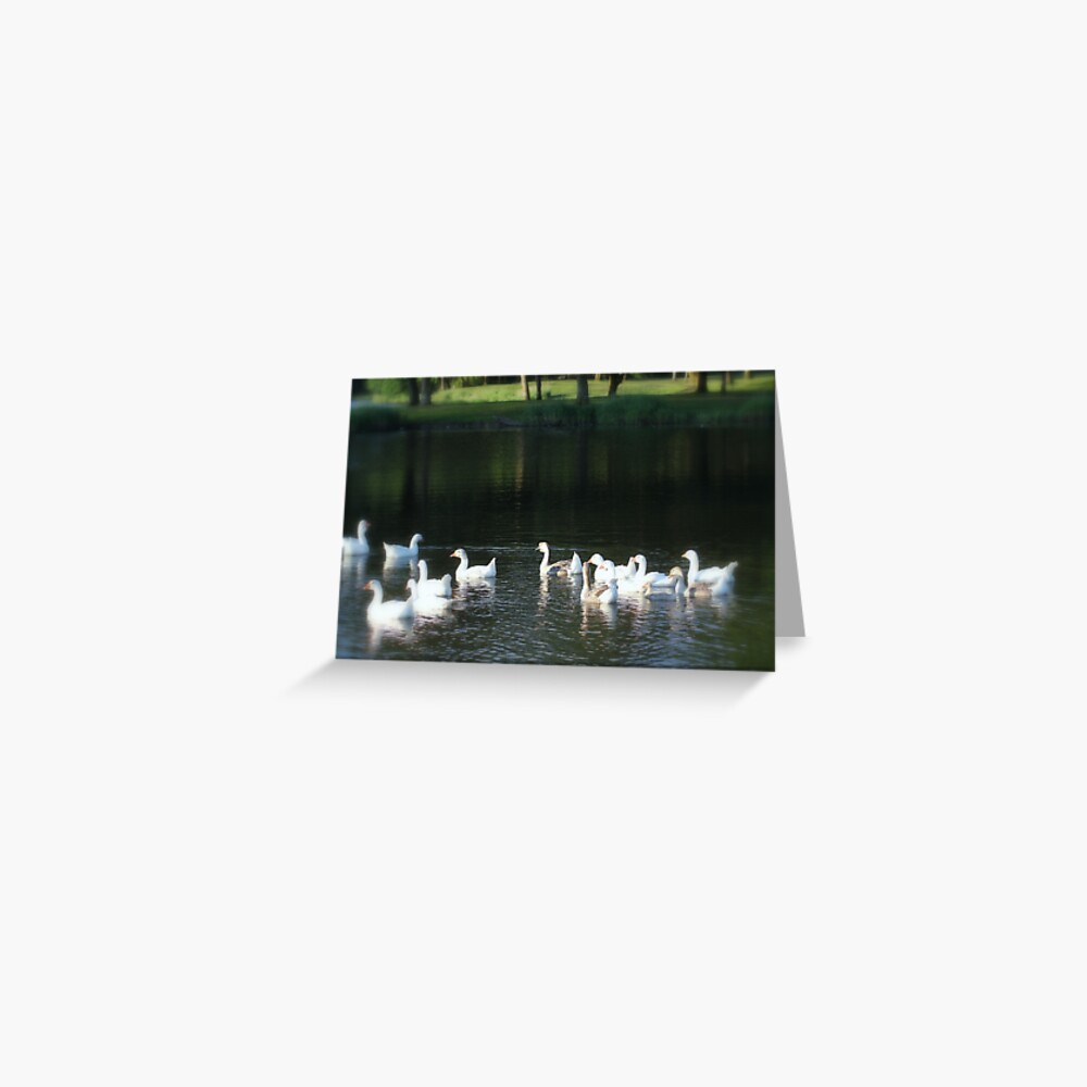 Geese in Trojan pond, near Goble, Oregon Greeting Card
