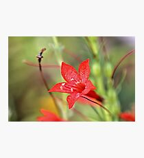 Radiant in Red Photographic Print