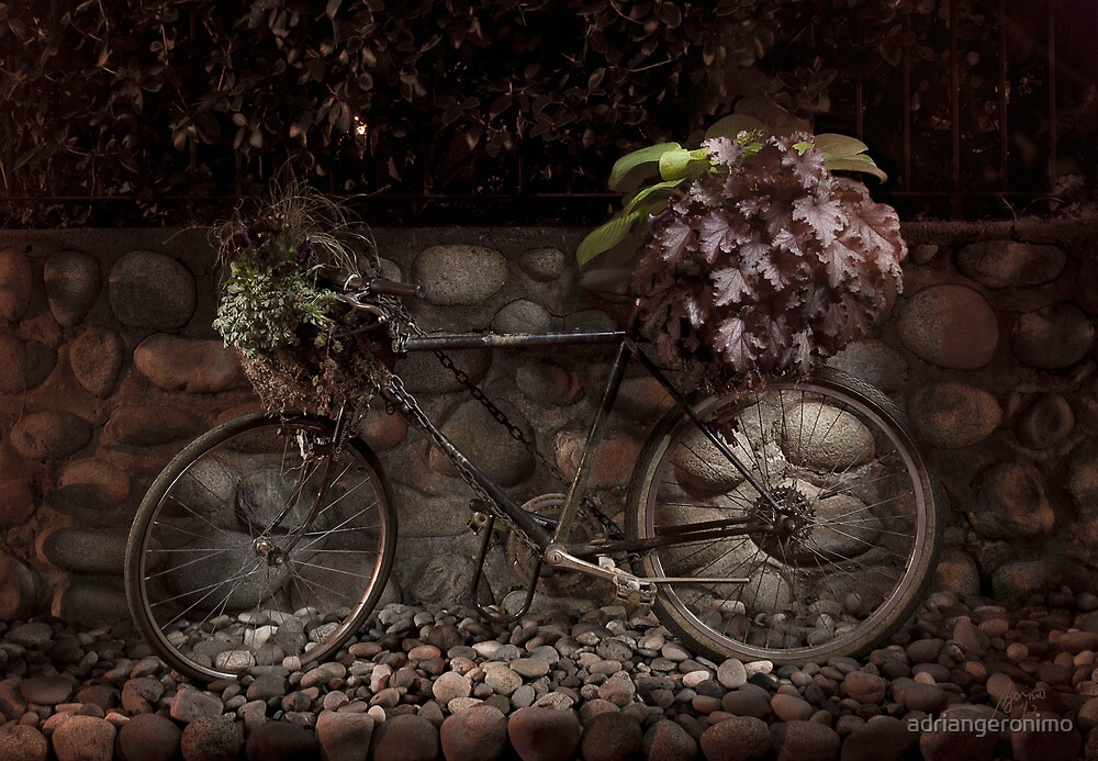 Bicycle  by adriangeronimo