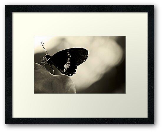 Nectar connoisseur by Anne Staub