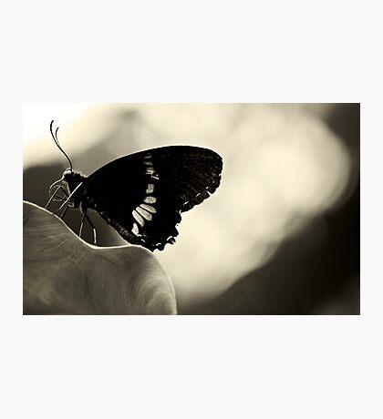 Nectar connoisseur Photographic Print