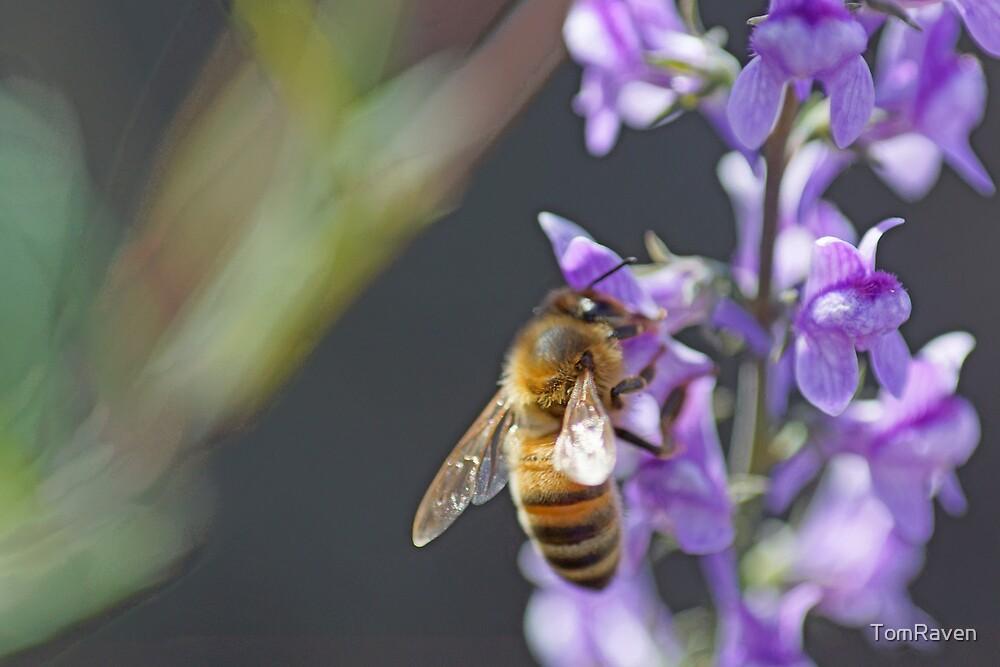 Bee Happy II by TomRaven