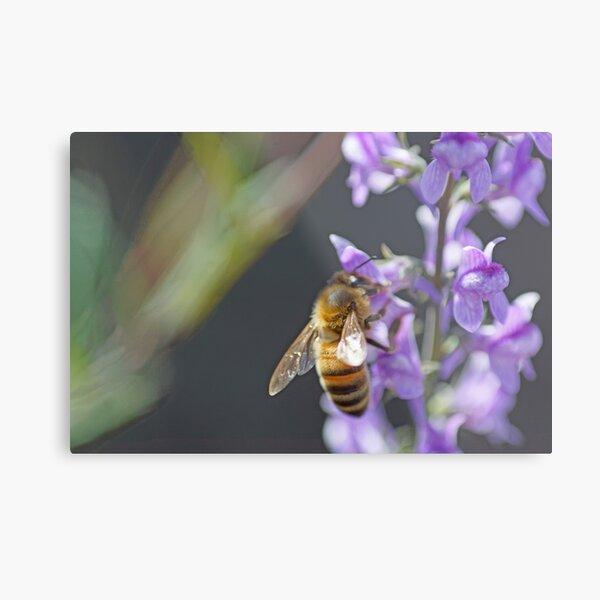 Bee Happy II Metal Print