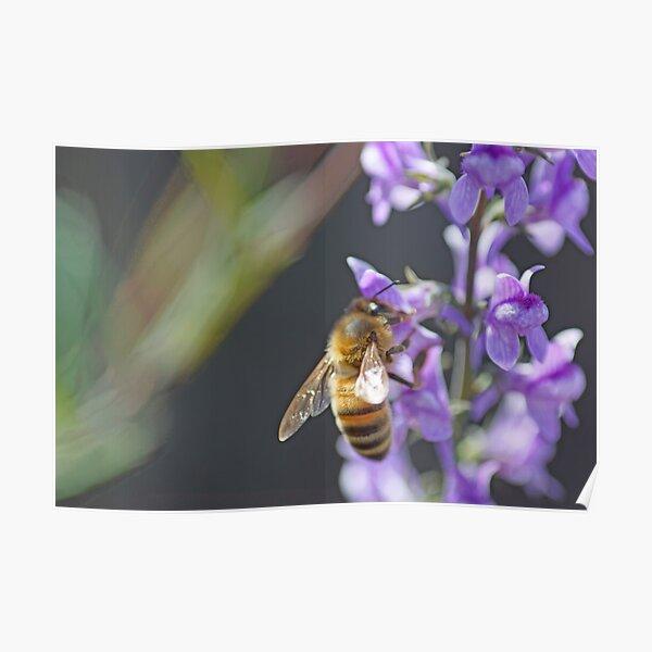 Bee Happy II Poster
