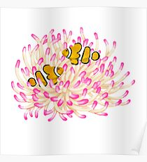 Coral Reef Clownfish with Anemone Poster