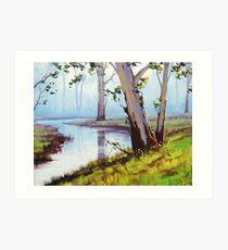 River Gum trees Art Print