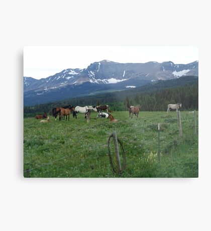 BLACKFOOT HORSE BAND - NEAR BROWNING, MT Metal Print
