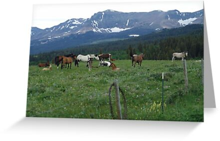 BLACKFOOT HORSE BAND - NEAR BROWNING, MT by May Lattanzio