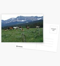BLACKFOOT HORSE BAND - NEAR BROWNING, MT Postcards