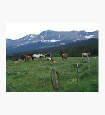 BLACKFOOT HORSE BAND - NEAR BROWNING, MT Photographic Print