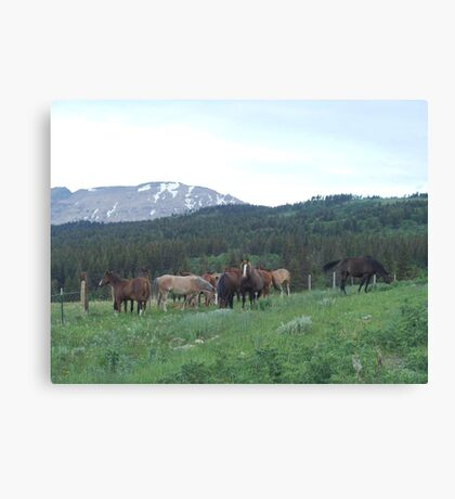 THE BLACKFOOT BAND AND THE SORREL STUD - Near Browning, MT Canvas Print
