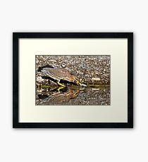 Juvenile Green Heron Fishing Framed Print